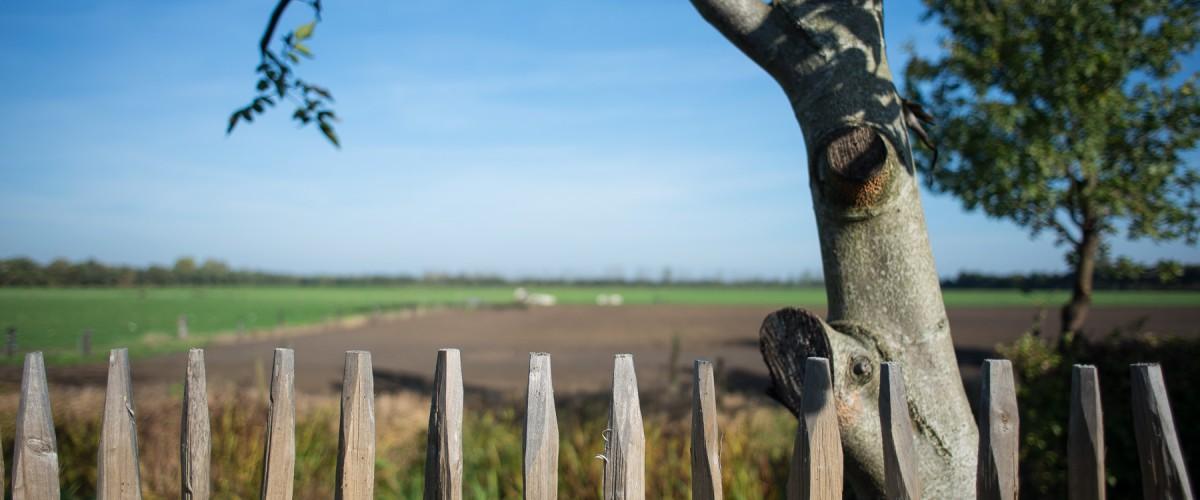 Uitzicht van op het terras